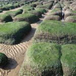 Hunstanton beaches norfolk boulders lines