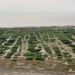 Hunstanton norfolk mysteries puzzles geology