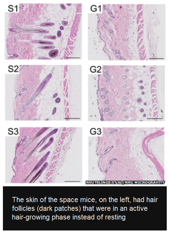 mice evolution magnetic zero gravity 0 iss