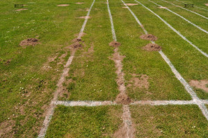 molehills in lines - animal magic mystery