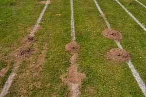 mole hills in lawn - england uk molehills