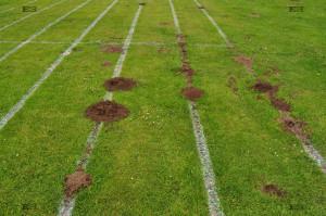animal mysteries - molehills digging in lines