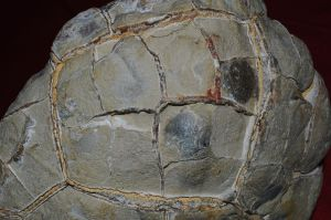 septarian concretions mineral formation